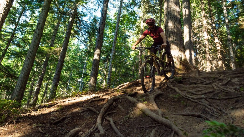 Rider mountain biking down a singletrack trail on Blackcomb Mountain in Whistler.